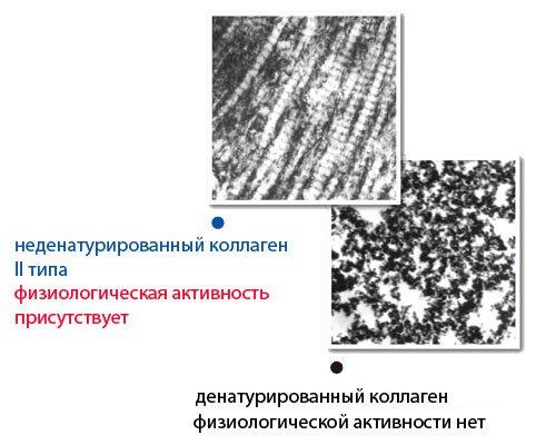 Изображение - Коллаген второго типа для суставов collagen_3