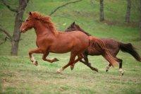 Лечение артрита лошадей.